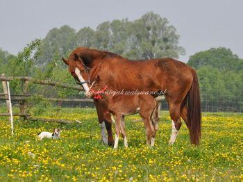2011.05.16 - Szczęśliwa Dream z córeczką