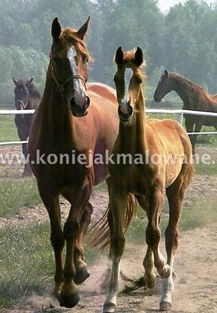 """Hodowla koni """"Ferstil"""""""